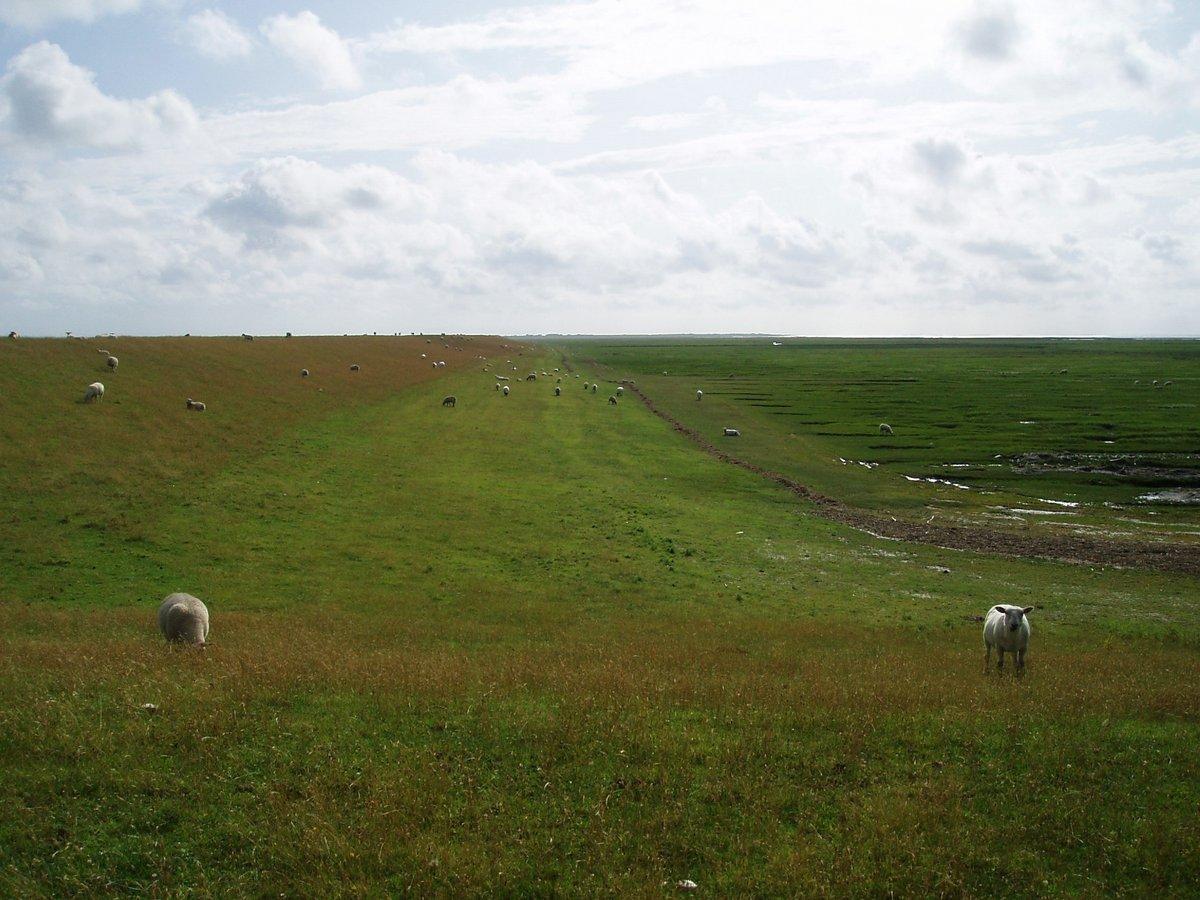 Landleben St. Peter-Ording: Landausflug auf der Halbinsel Eiderstedt